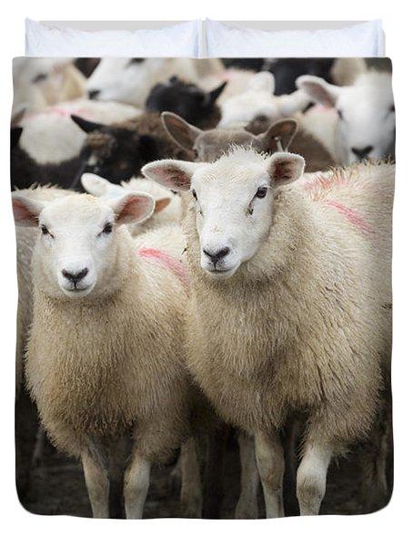 Sheep In A Farm Yard Duvet Cover