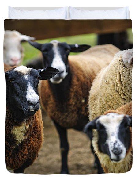 Sheep On A Farm Duvet Cover by Elena Elisseeva