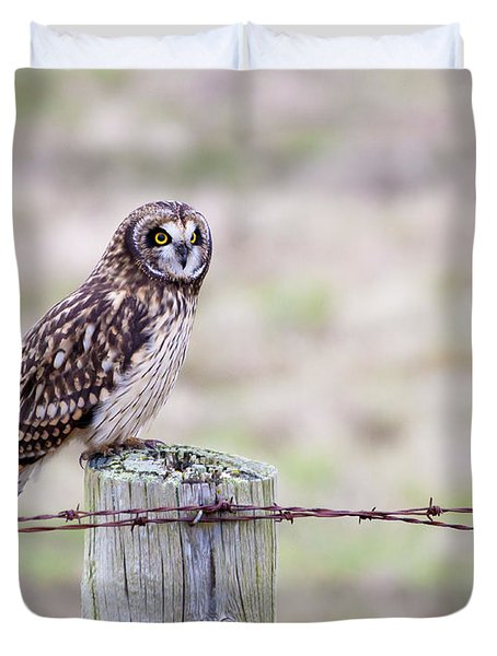 Short Eared Owl Boundary Bay Duvet Cover