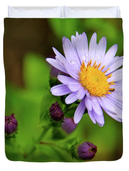 Showy Aster Duvet Cover by Ed  Riche