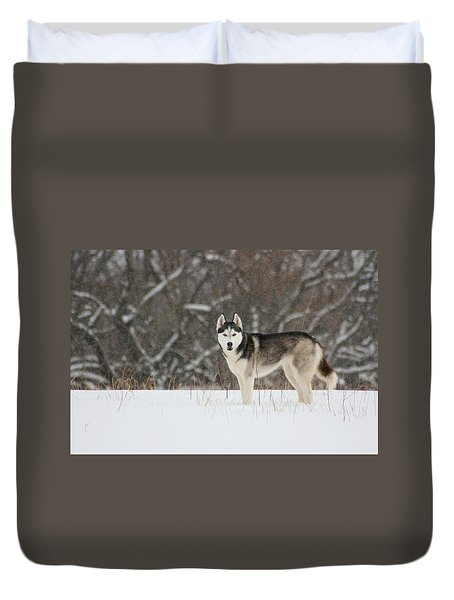 Duvet Cover featuring the photograph Siberian Husky 20 by David Dunham