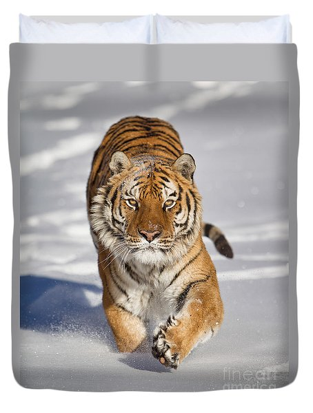 Siberian Tiger Coming Forward Duvet Cover