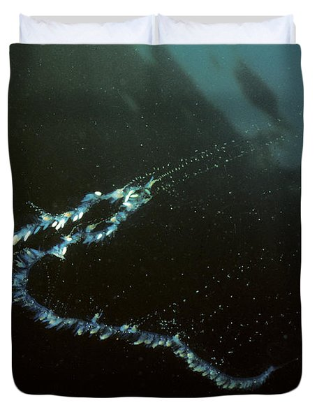 Siphonophore Stephonomia Sp Duvet Cover