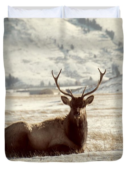 Sitting Bull Elk Duvet Cover by Juli Scalzi