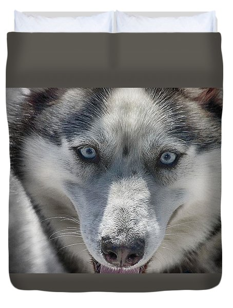 Duvet Cover featuring the photograph Sled Dog  by Dennis Baswell