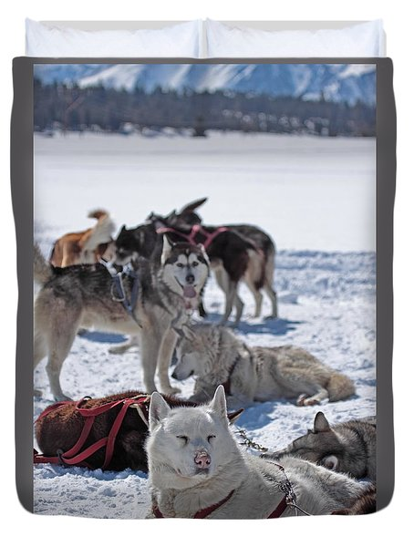 Sled Dogs Duvet Cover by Duncan Selby
