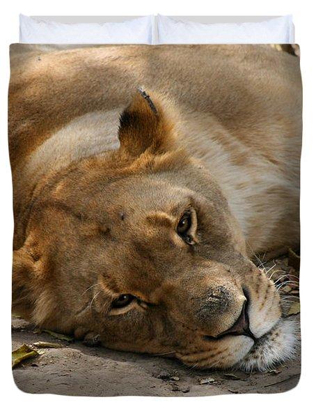 Sleepy Lioness Duvet Cover