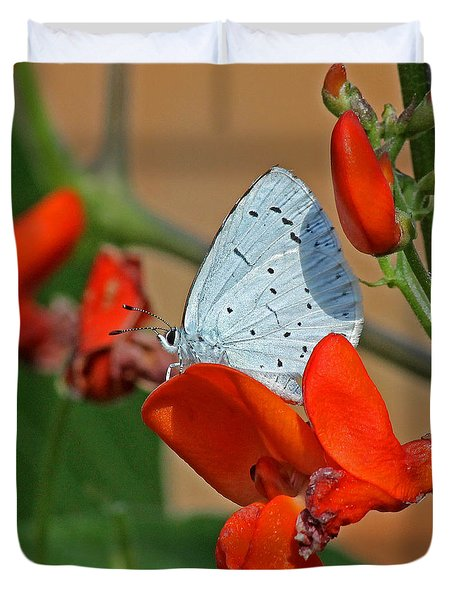 Small Blue Butterfly Duvet Cover by Tony Murtagh