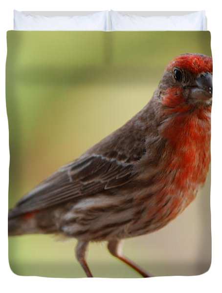 Small Brown And Red Bird Duvet Cover by DejaVu Designs