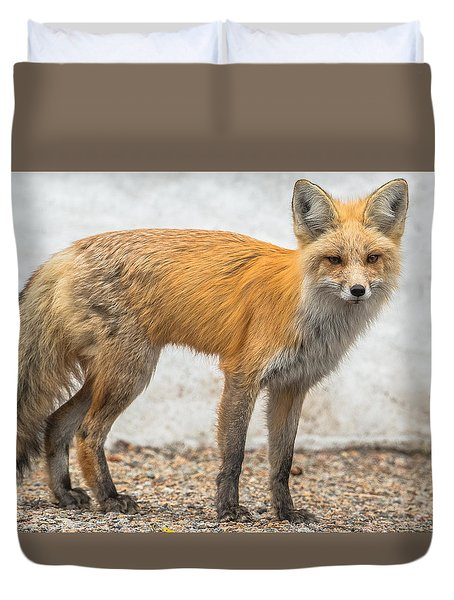 Smart Like A Fox Duvet Cover by Yeates Photography