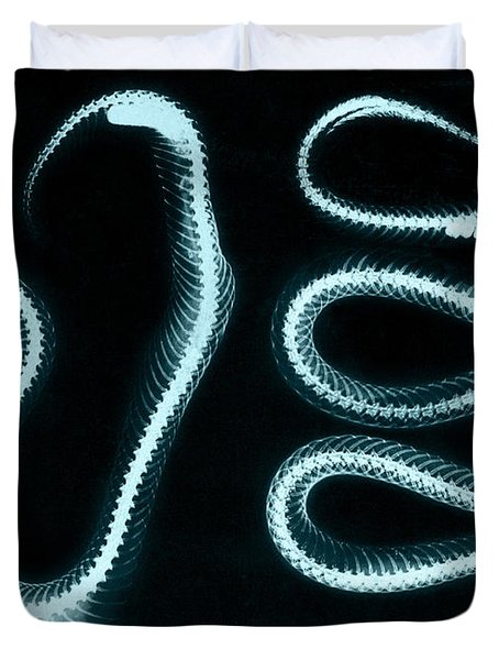 Snake Skeletons X-ray Duvet Cover by Science Source