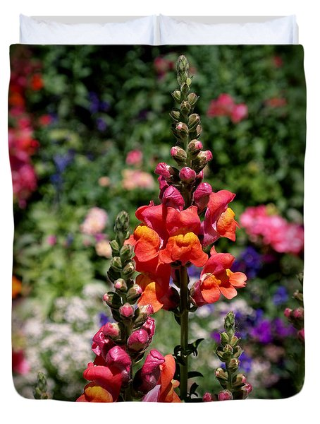 Snapdragons Duvet Cover by Rona Black