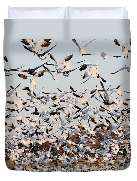 Snow Geese Takeoff From Farmers Corn Field. Duvet Cover