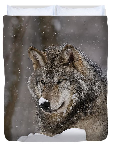 Snow Nose Duvet Cover by Wolves Only