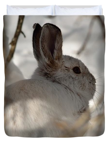 Snowshoe Hare Duvet Cover by James Petersen