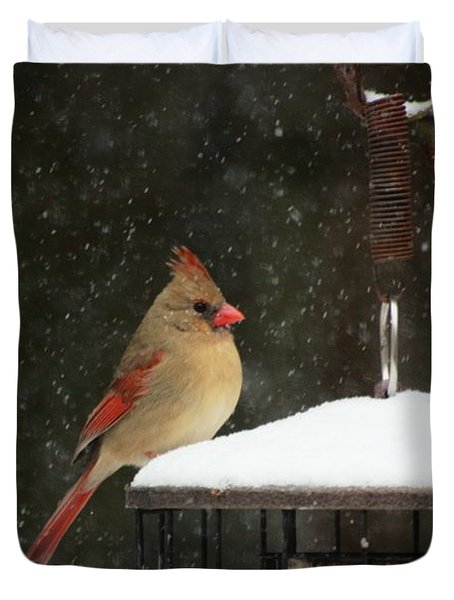 Snowy Cardinal Duvet Cover by Benanne Stiens