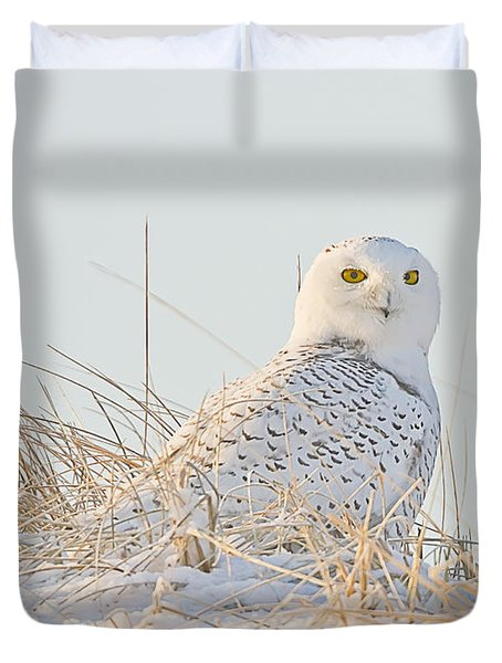 Snowy Owl In The Snow Covered Dunes Duvet Cover by John Vose