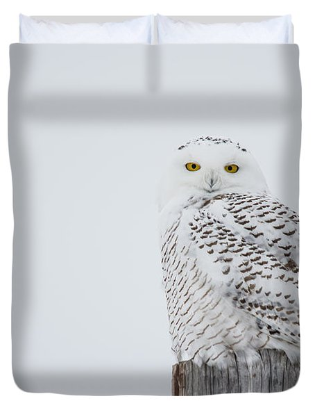 Snowy Owl Perfection Duvet Cover
