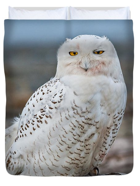 Snowy Owl Watching From A Driftwood Perch Duvet Cover