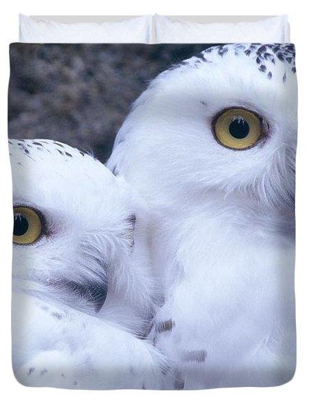 Snowy Owls Duvet Cover