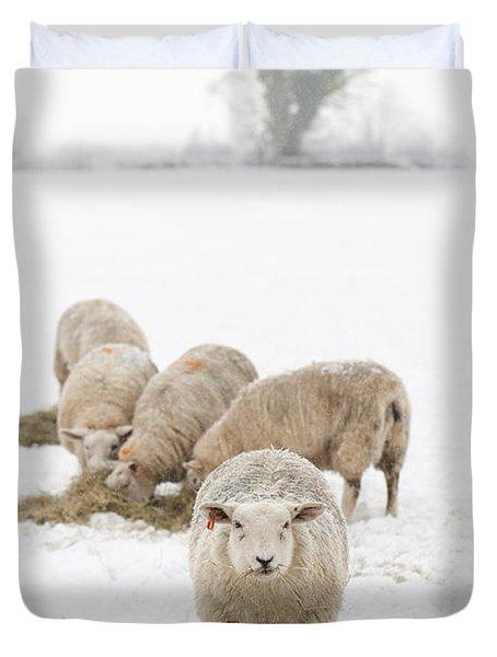 Snowy Sheep Duvet Cover by Anne Gilbert