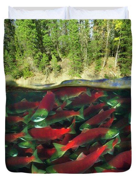 Sockeye Salmon Run Duvet Cover