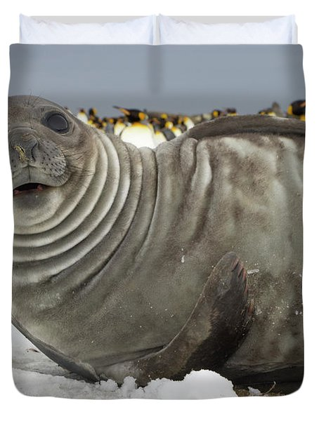 Southern Elephant Seal Weaner Duvet Cover