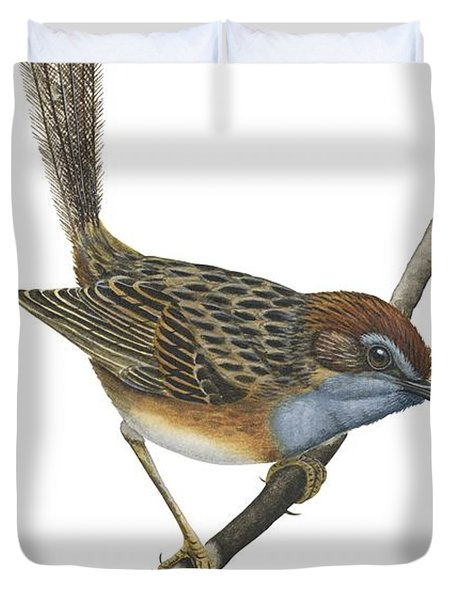 Southern Emu Wren Duvet Cover by Anonymous