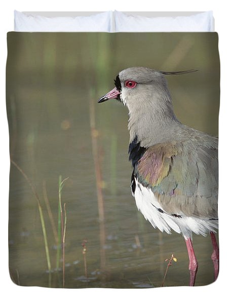 Southern Lapwing In Marshland Pantanal Duvet Cover