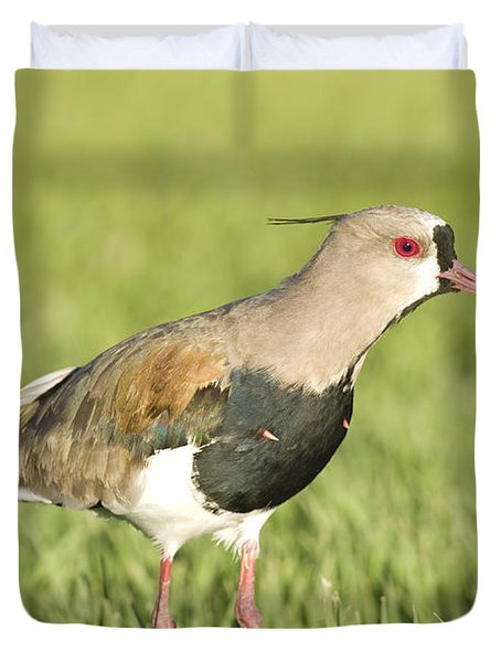Southern Lapwing Duvet Cover