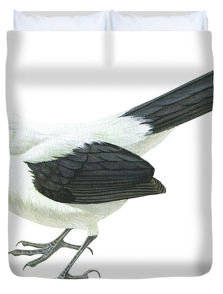 Southern Pied Babbler  Duvet Cover by Anonymous