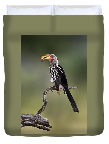 Southern Yellowbilled Hornbill Duvet Cover by Johan Swanepoel