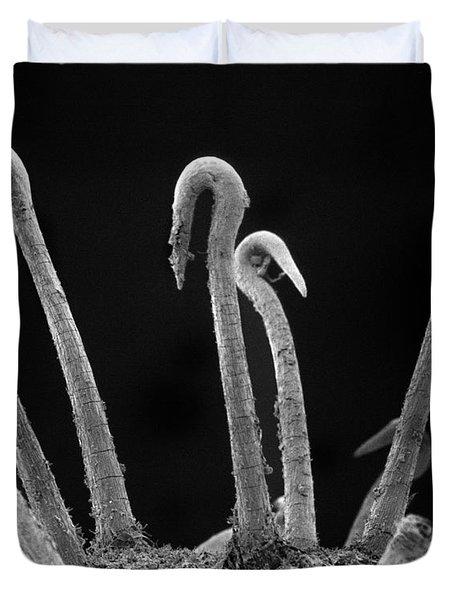 Spiny Cocklebur Sem Duvet Cover by Albert Lleal