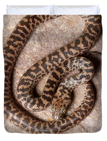 Spotted Python Antaresia Maculosa Top Duvet Cover