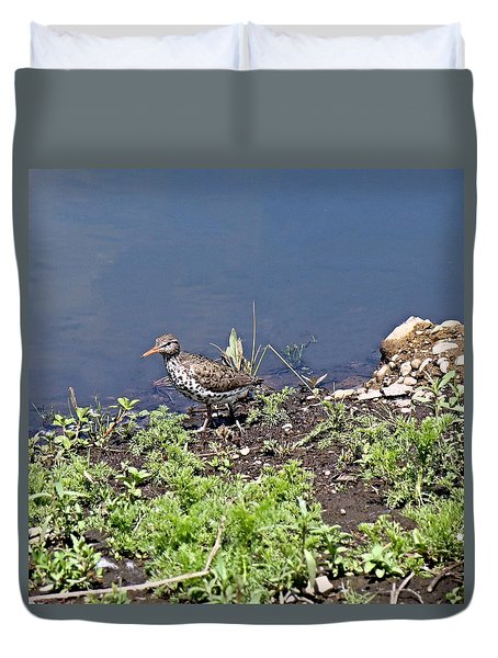 Duvet Cover featuring the photograph Spotted Sandpiper by Nick Kloepping