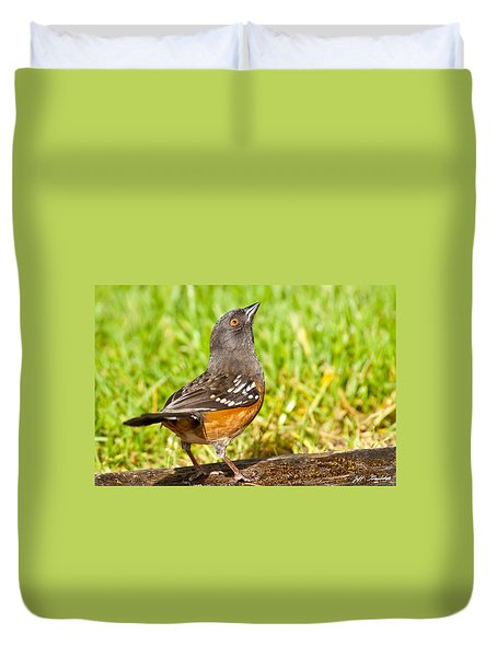 Spotted Towhee Looking Up Duvet Cover