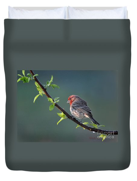 Song Bird In Spring Duvet Cover by Nava Thompson