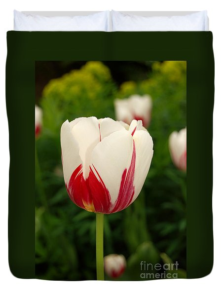 Duvet Cover featuring the photograph Spring White And Red Tulip by Eva Kaufman