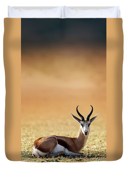 Springbok Resting On Green Desert Grass Duvet Cover