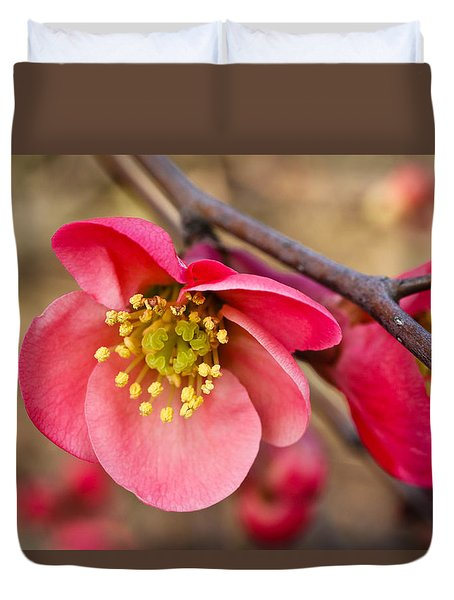 Springtime Quince Duvet Cover by Julie Andel