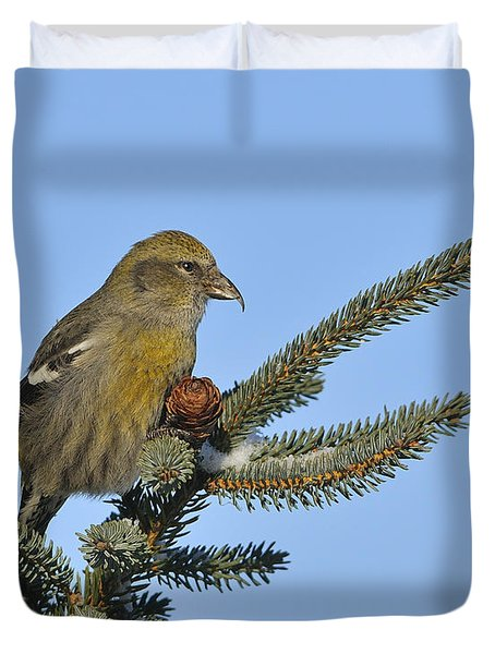 Spruce Cone Feeder Duvet Cover by Tony Beck