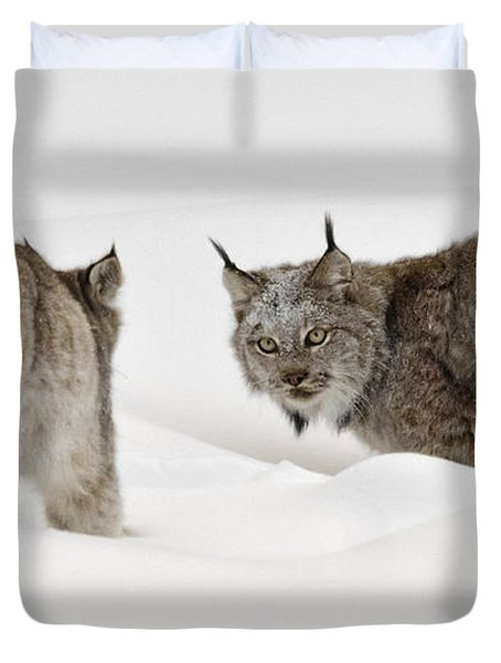 Staredown Duvet Cover by Dee Cresswell