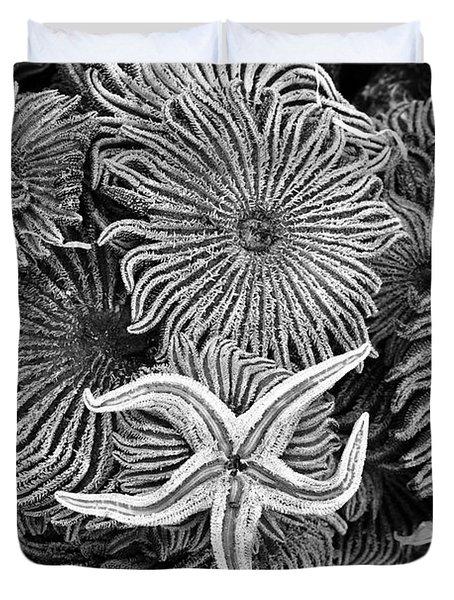 Starfish 3 Duvet Cover