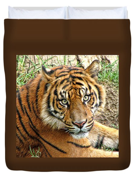 Staring Tiger Duvet Cover