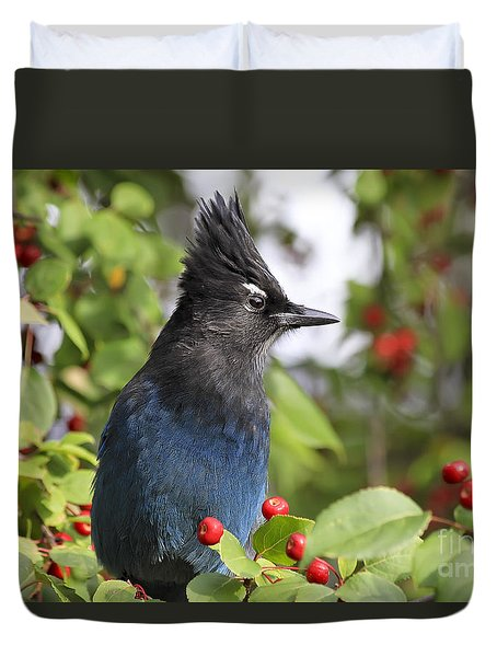 Steller's Jay And Red Berries Duvet Cover