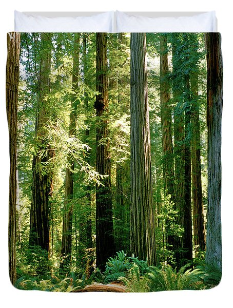 Stout Grove Coastal Redwoods Duvet Cover
