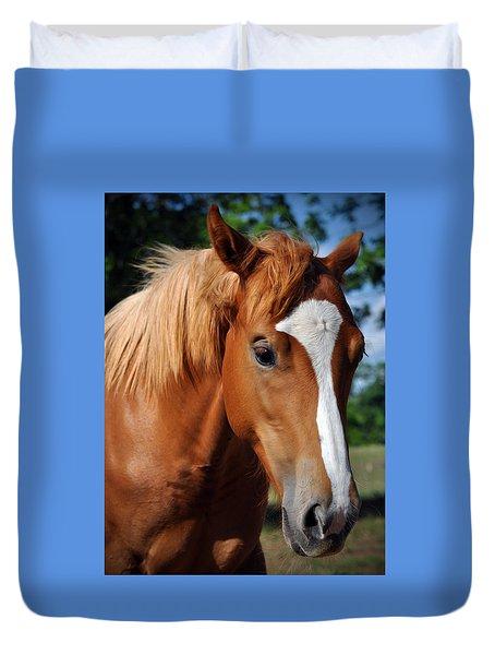 Stud Horse  Duvet Cover