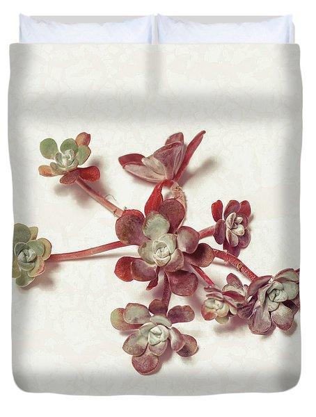 Succulent Plant 1 Duvet Cover
