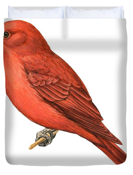 Summer Tanager  Duvet Cover by Anonymous