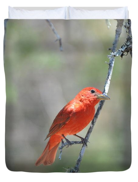 Summer Tanager Duvet Cover